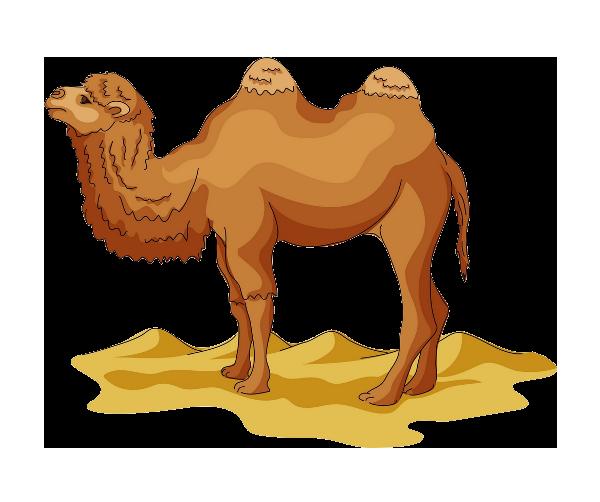 Wild Bactrian camel Drawing Cartoon Clip art - Desert Camel Yellow 600*502  transprent Png Free Download - Livestock, Camel, Carnivoran. - Camel PNG Cartoon