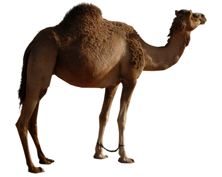 Camel Png image #37108 - Camel PNG