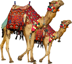 Camel PNG Transparent Image