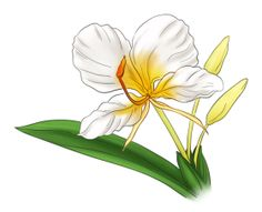 Plant and Flower illustrations Part - Camia Flower PNG