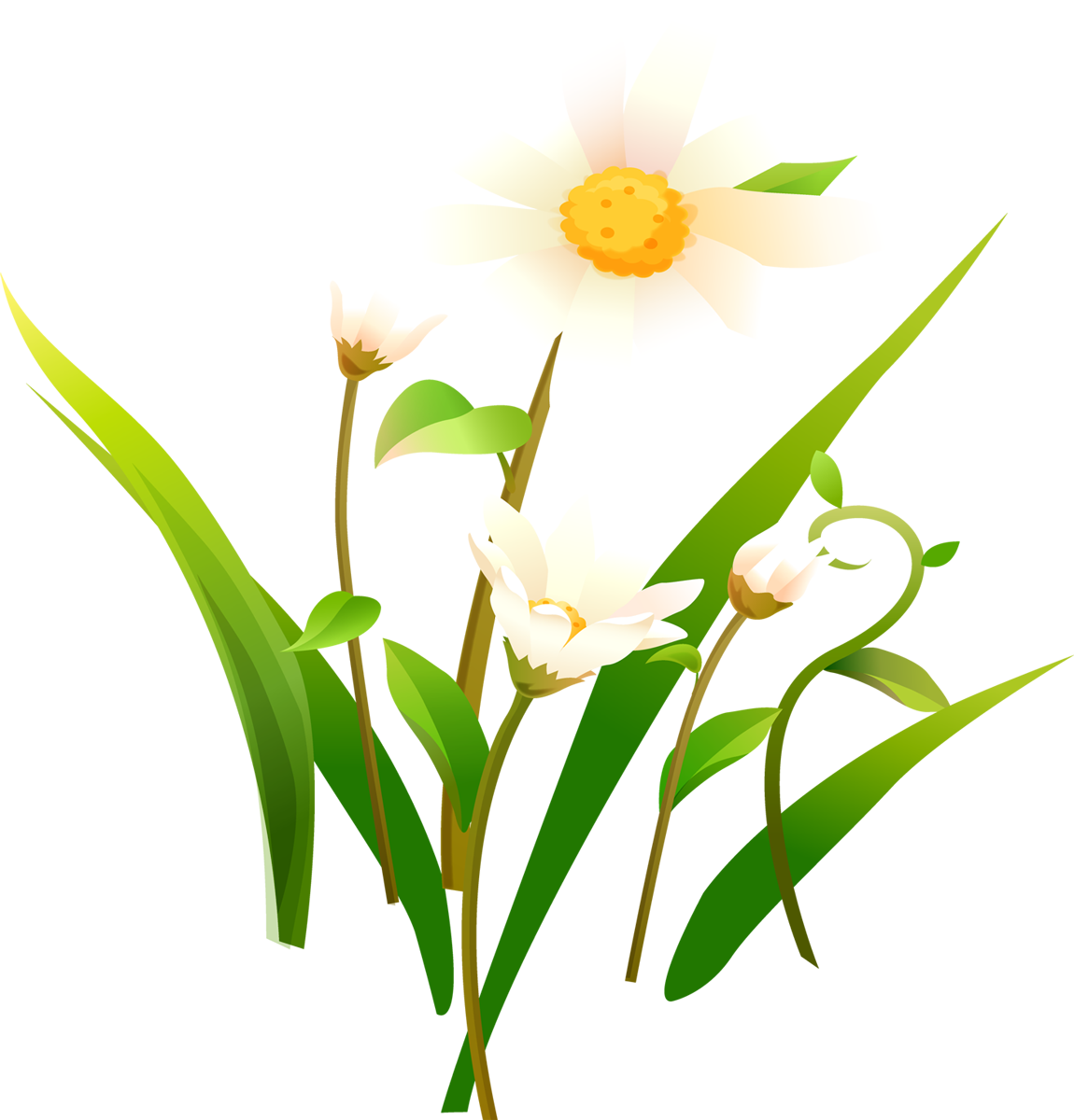 Camomile PNG - 19680
