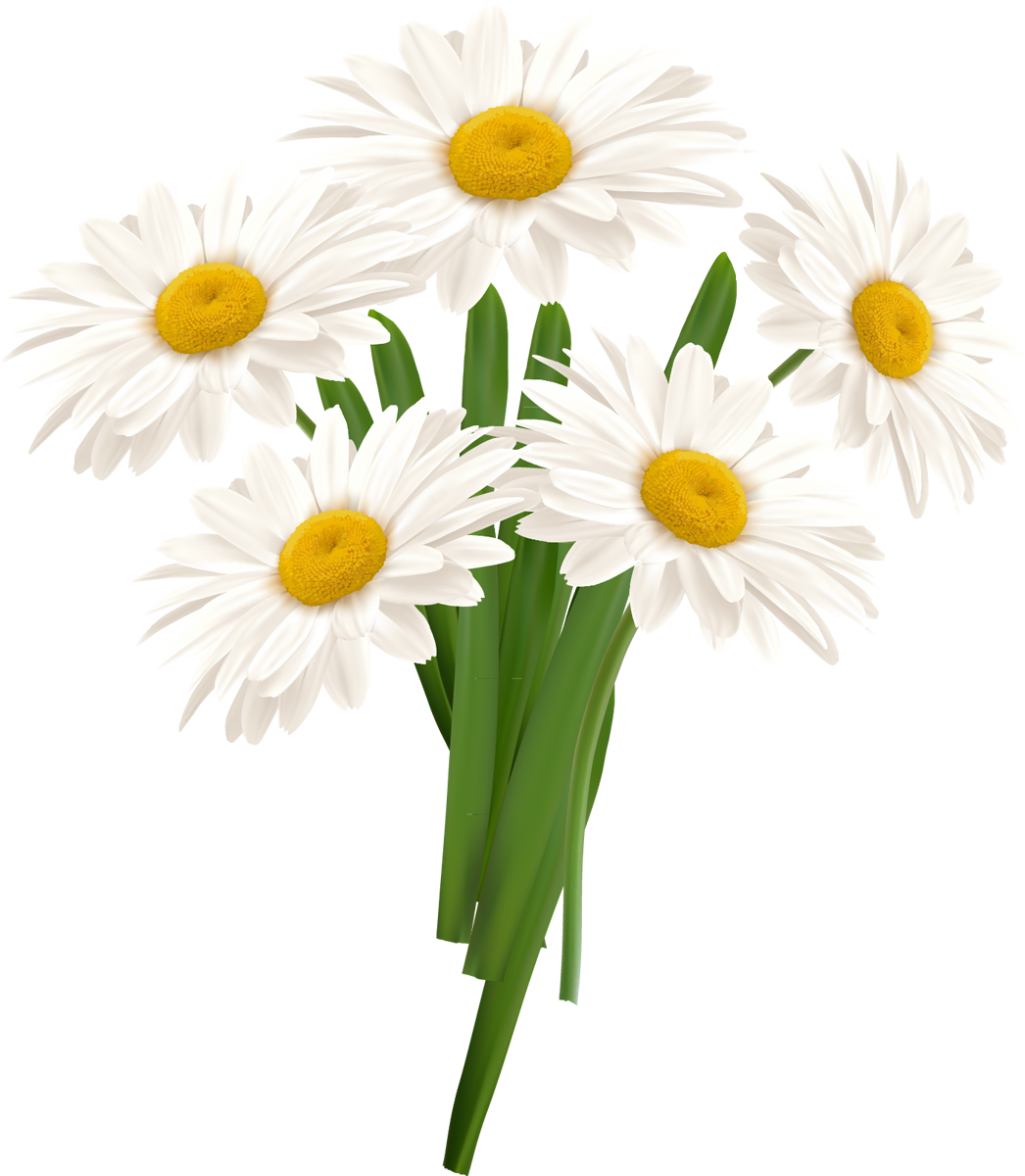 Camomile PNG - 19667