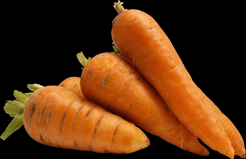 Carrot HD PNG - 117304