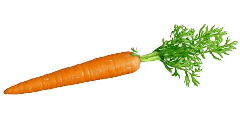 pin Carrot clipart transparent background #12 - Carrot HD PNG