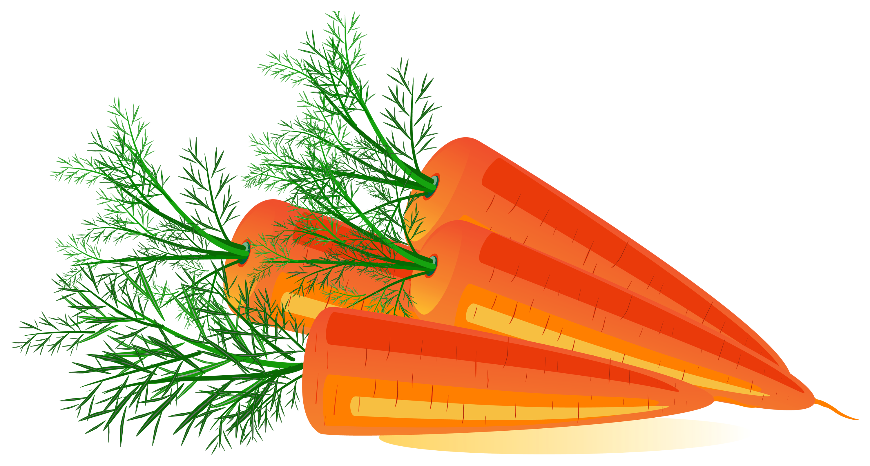 Carrot PNG - 19920