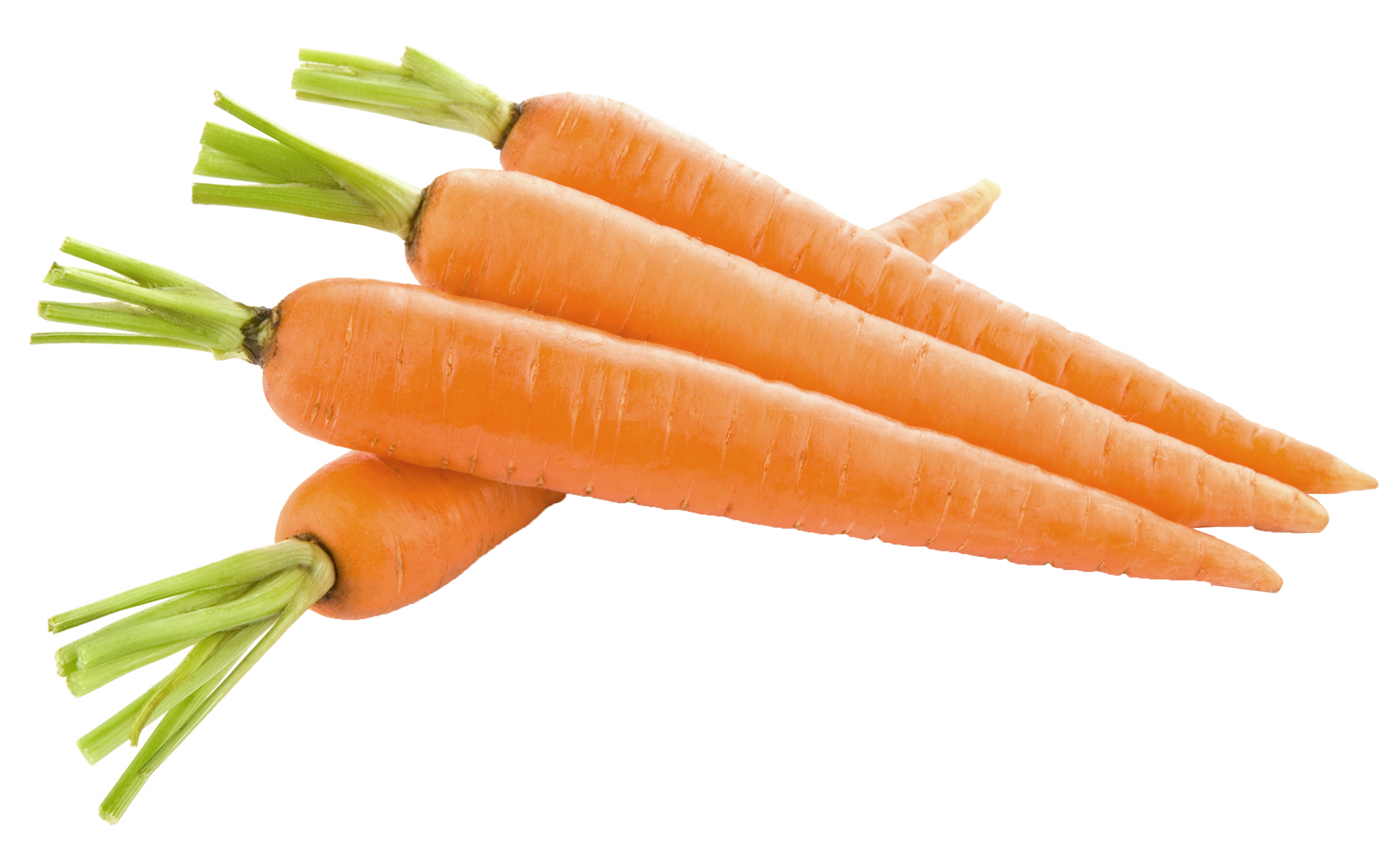 Carrot PNG - 19914