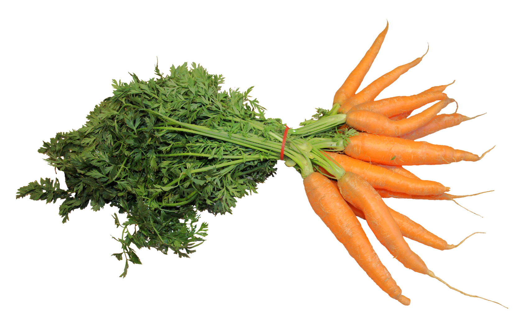 Carrot PNG - 19922