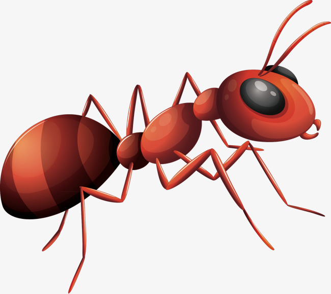 ants vector, Ant, Decorative Ant, Material PNG and Vector - Cartoon Ant PNG