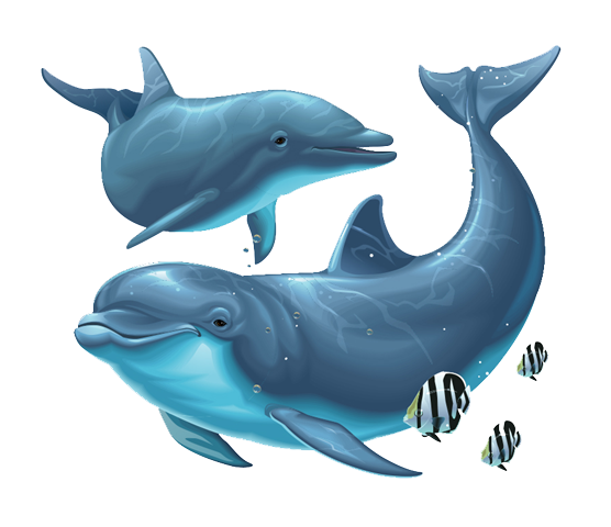 Dolphin Png File PNG Image - Cartoon Dolphin PNG HD