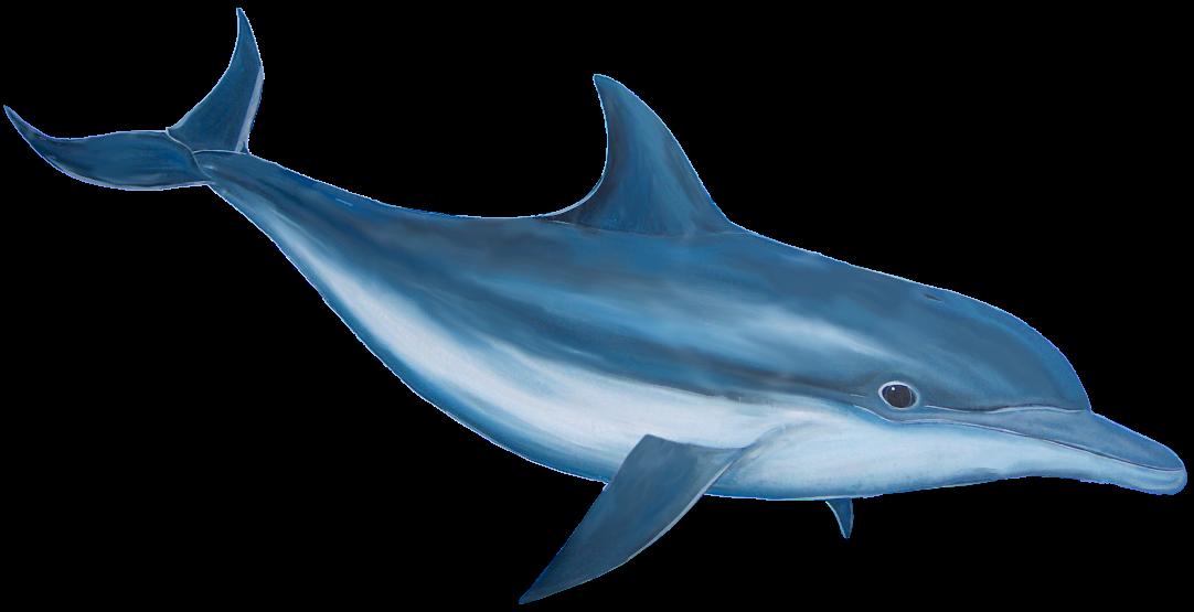 Cartoon Dolphin PNG HD - 124593