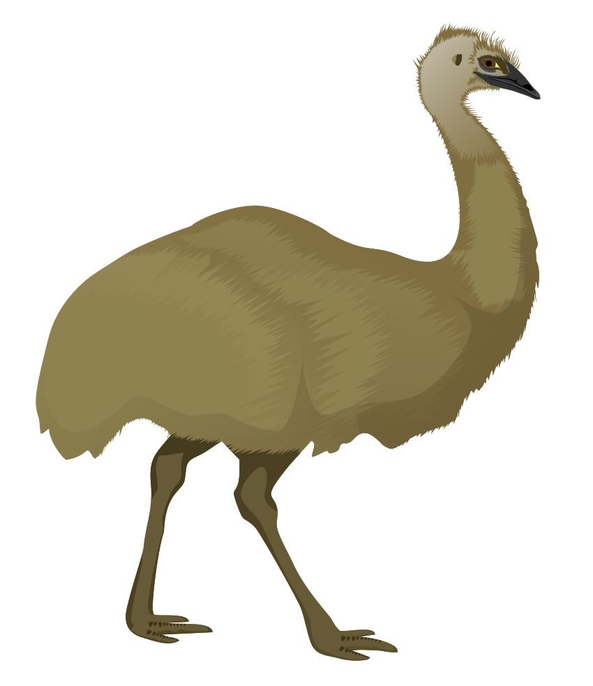 Cartoon Emu PNG-PlusPNG.com-850 - Cartoon Emu PNG