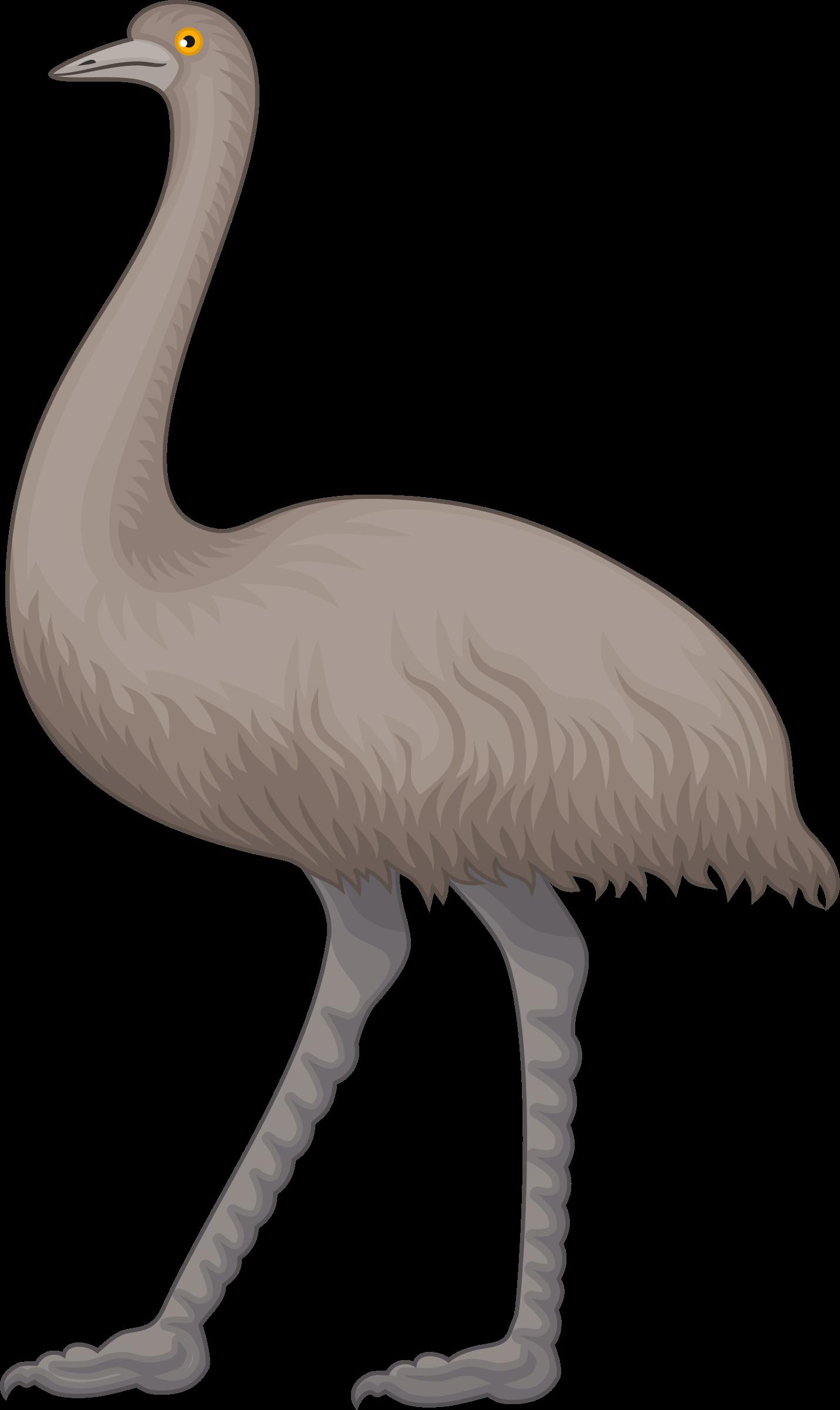 Cartoon Emu PNG - 64420