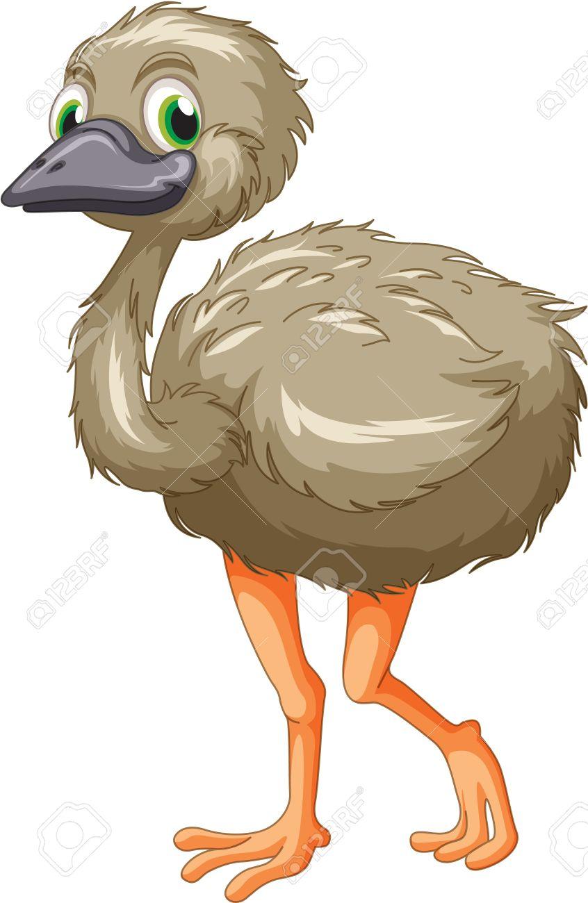 emu clipart #8 - Cartoon Emu PNG