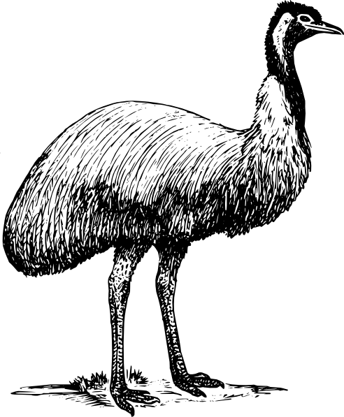 PNG: small · medium · large - Cartoon Emu PNG