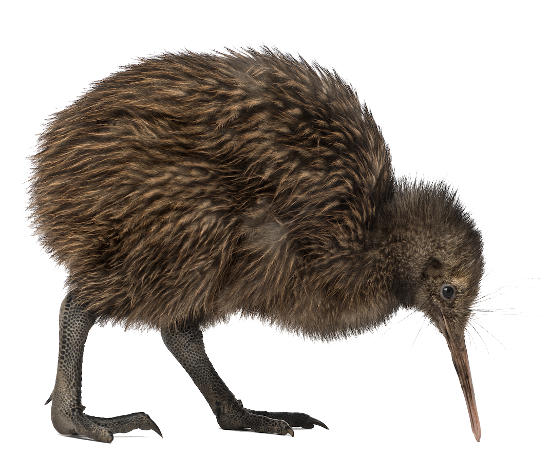 Kiwi Bird PNG Image - Cartoon Kiwi Bird PNG