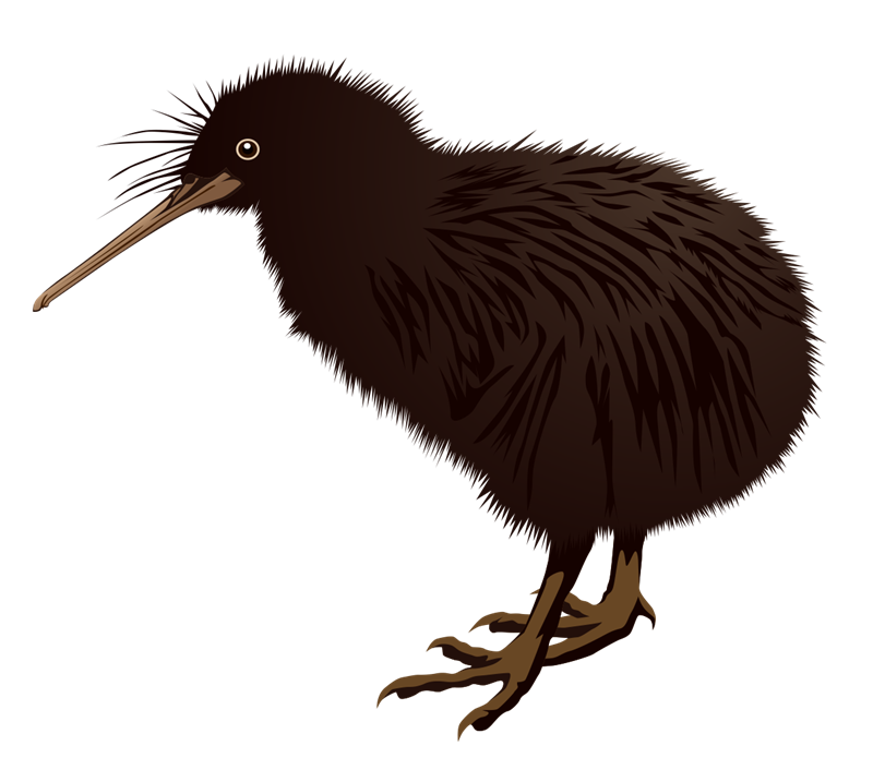 pin Bird clipart kiwi #4 - Cartoon Kiwi Bird PNG