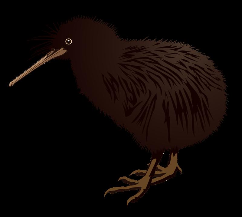Cartoon Kiwi Bird PNG - 89034