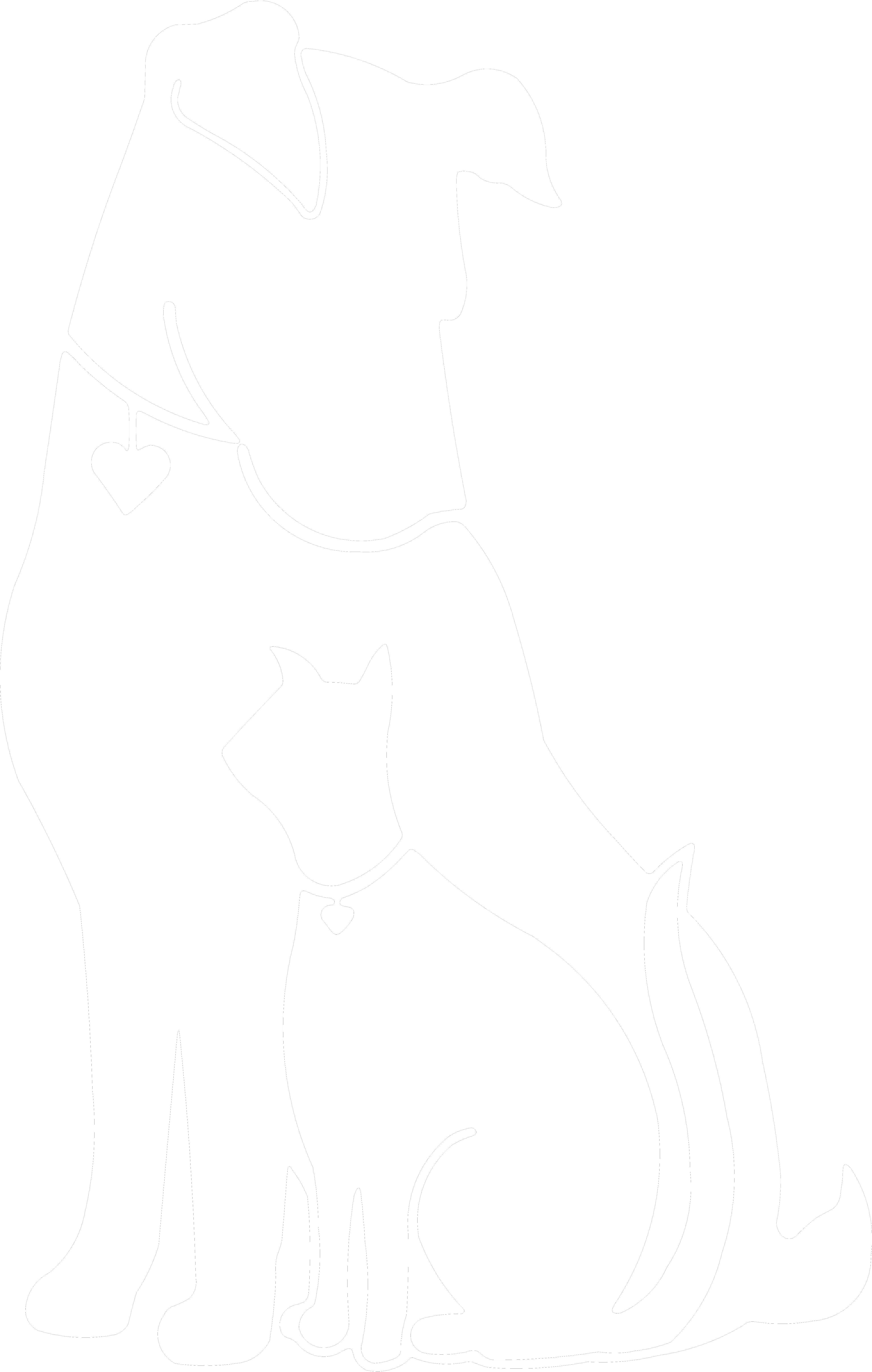Dog And Cat Black Background