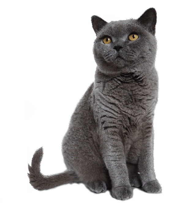 Cat And Dog PNG No Background - 161594