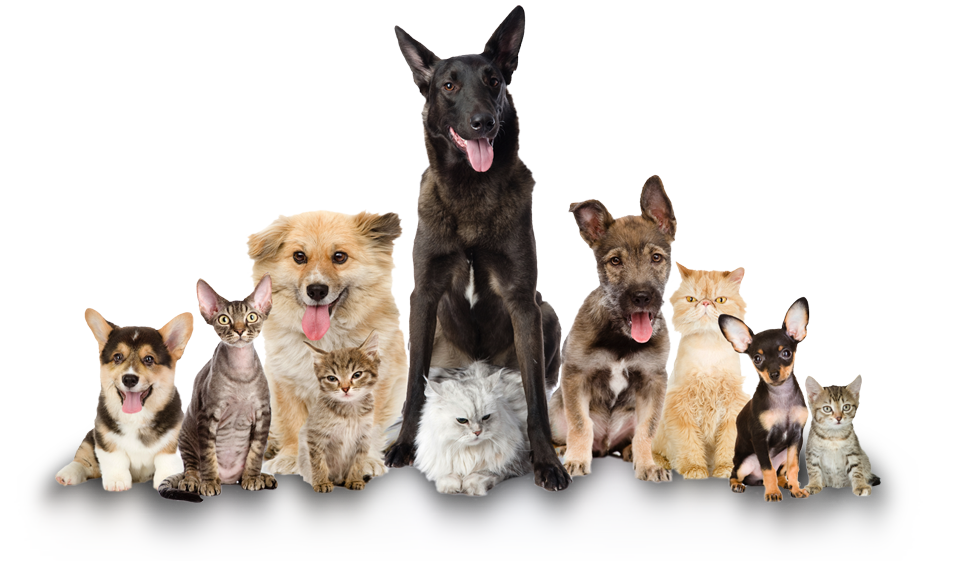 Cat And Dog PNG No Background - 161588