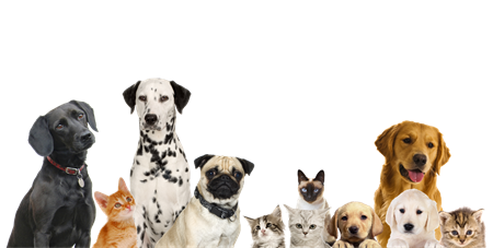 Cat And Dog PNG No Background - 161583
