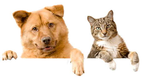 Cat And Dog PNG No Background