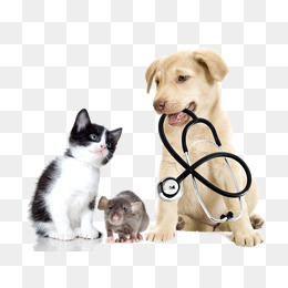 Cat And Dog PNG No Background - 161587