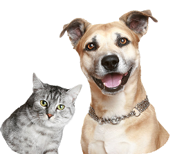 Dog-and-Cat-Transparent-Background - Cat And Dog PNG No Background