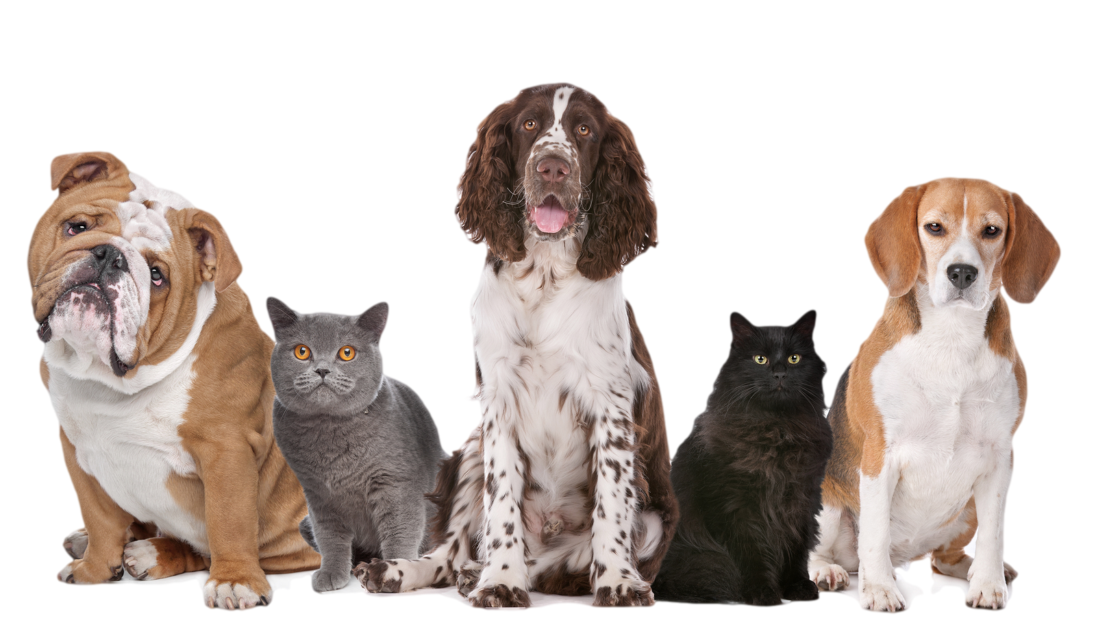 Dog PNG Transparent Image - Cat And Dog PNG No Background