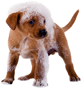 Cat And Dog PNG No Background - 161590