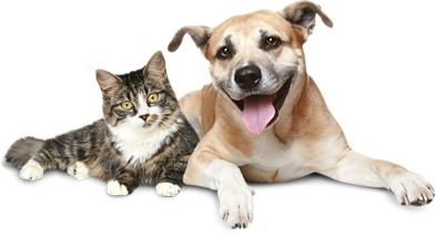 Our unique artisan crafted pet memorials are a special way to honor the  memory of your beloved pet. - Cat And Dog PNG No Background