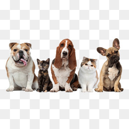 pet dogs and cats, Pet, Dog, Cat PNG Image and Clipart - Cat And Dog PNG No Background