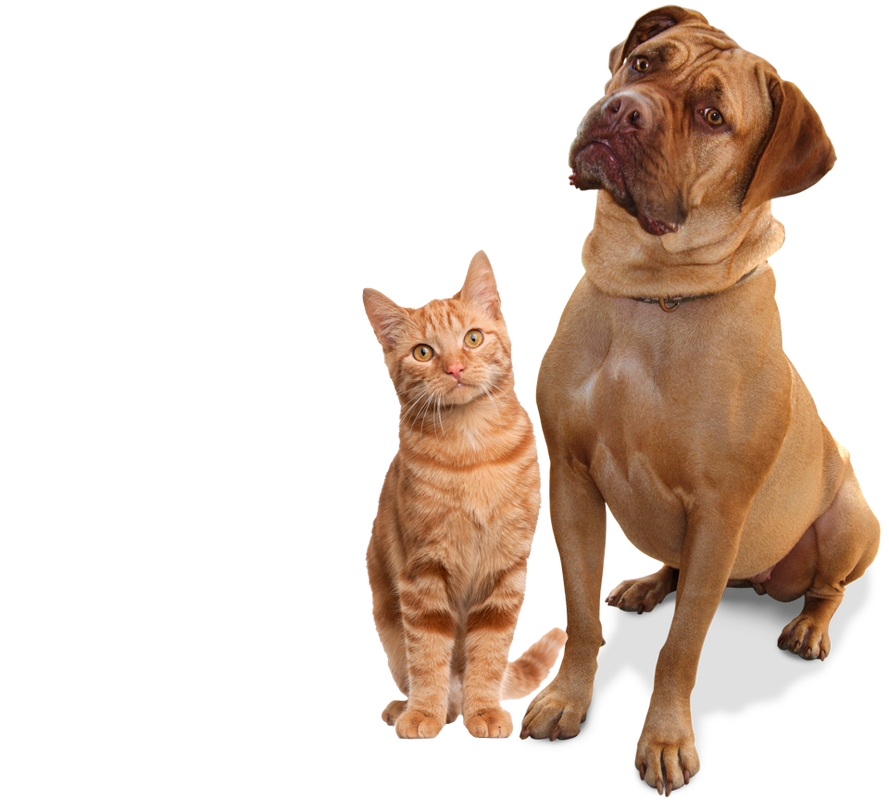 Cat And Dog PNG No Background - 161589