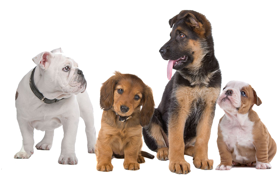 Puppy Training Classes - Cat And Dog PNG No Background