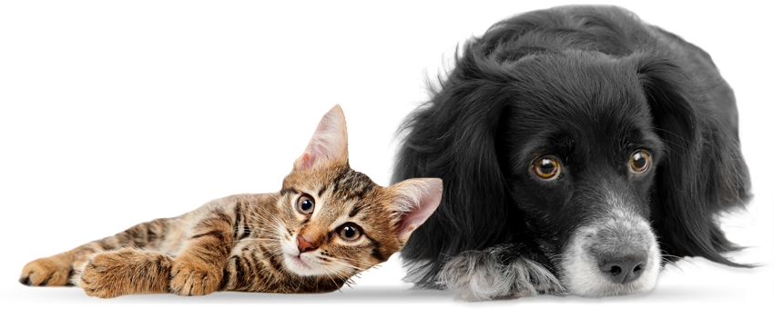 RESCUE CENTRE FOR HOMELESS CATS, DOGS AND OTHER ANIMALS - PNG HD Dogs And  Cats - Cat And Dog PNG No Background