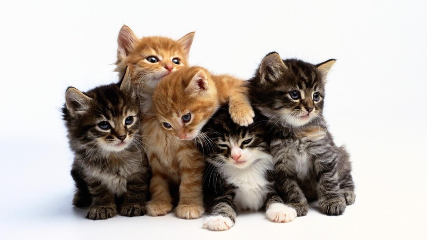 Cat Hd Png Transparent Cat Hdpng Images Pluspng