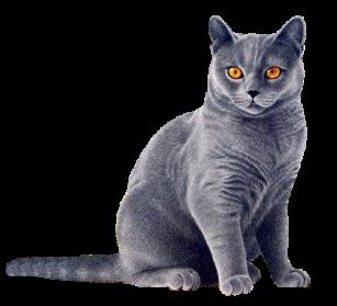 Cat HD PNG Transparent Cat HD.PNG Images.