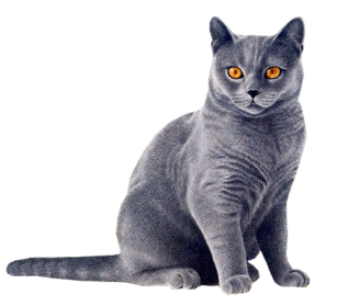 Cat HD PNG - 117475