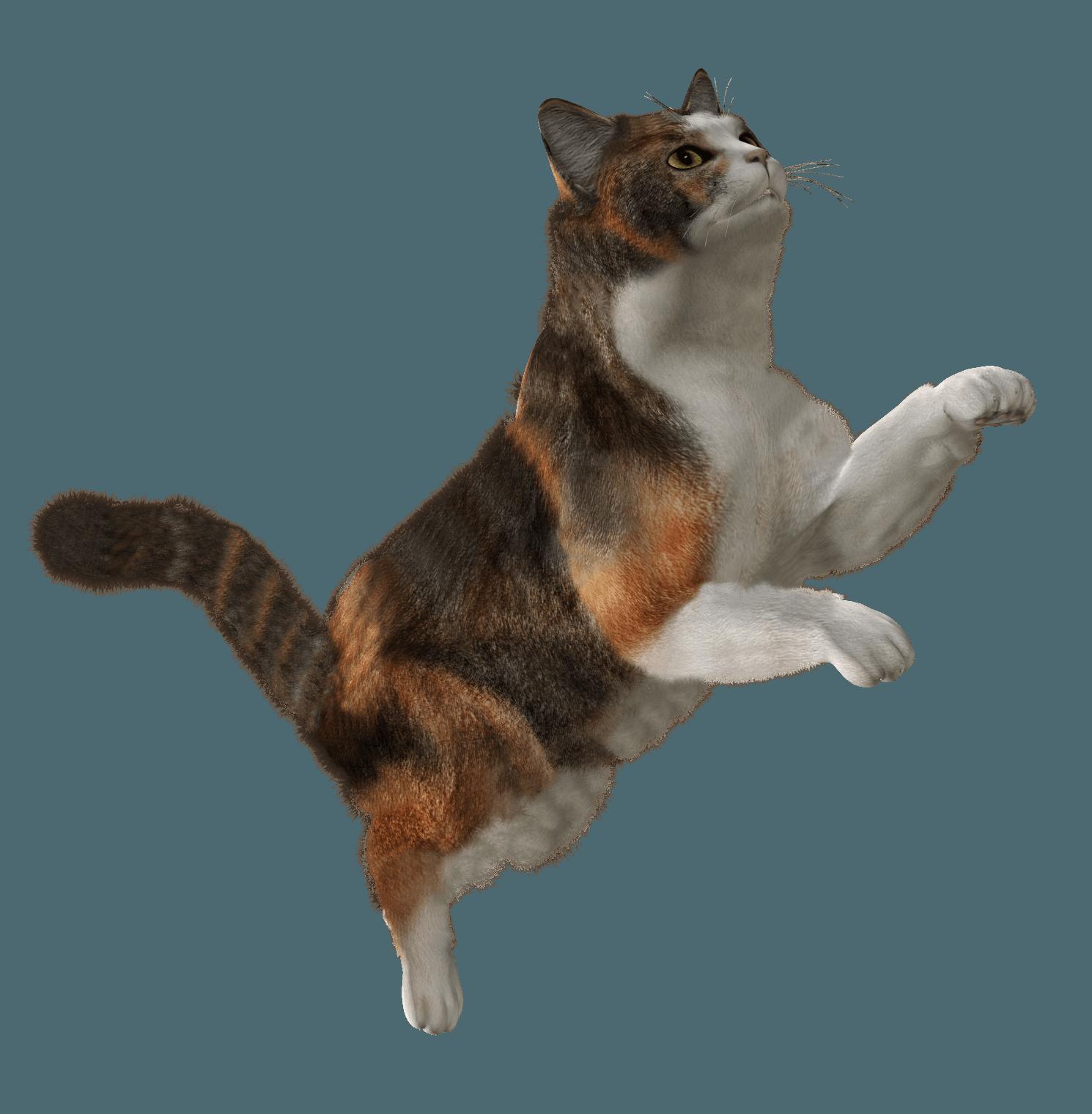 Cat HD PNG - 117483