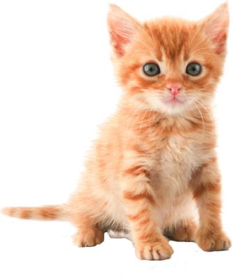 Cat HD PNG - 117480
