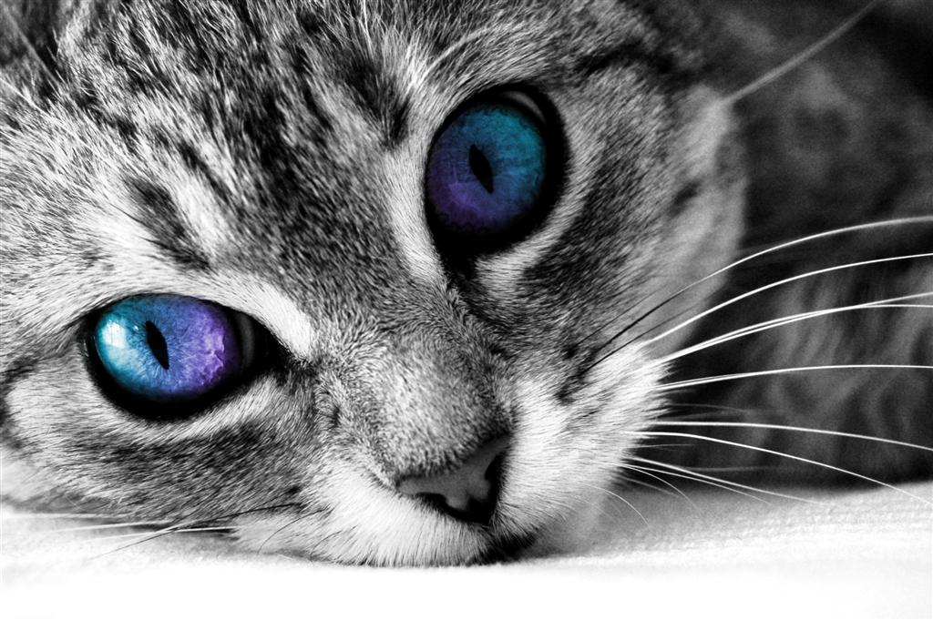 Cat HD PNG - 117485