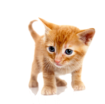 cat hd png transparent cat hd png images pluspng