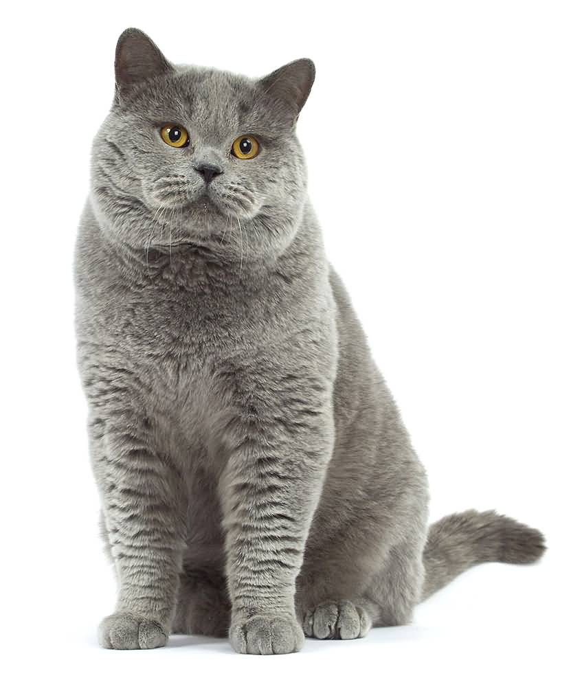 Cat HD PNG - 117476