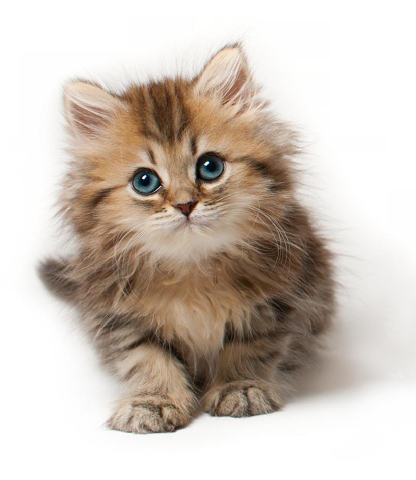 Cat HD PNG - 117473