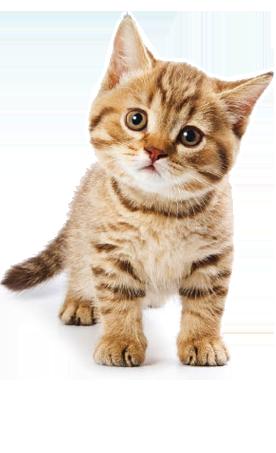 Cat HD PNG - 117481