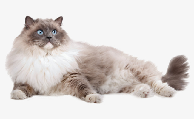 Cat HD PNG - 117484