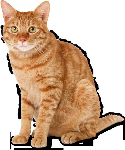 Cat HD PNG - 117470
