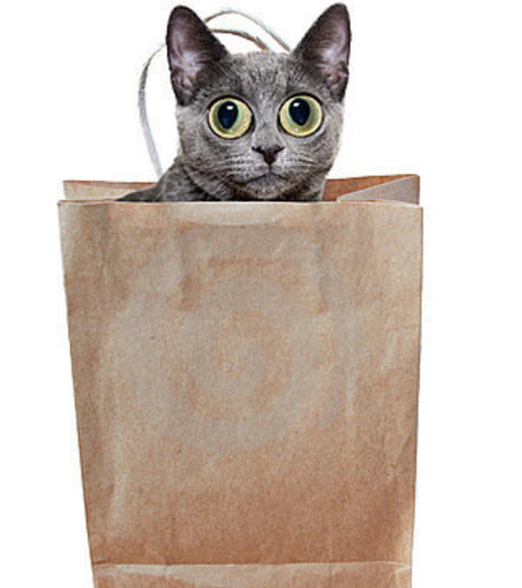 cat out of bag - Cat In A Bag PNG