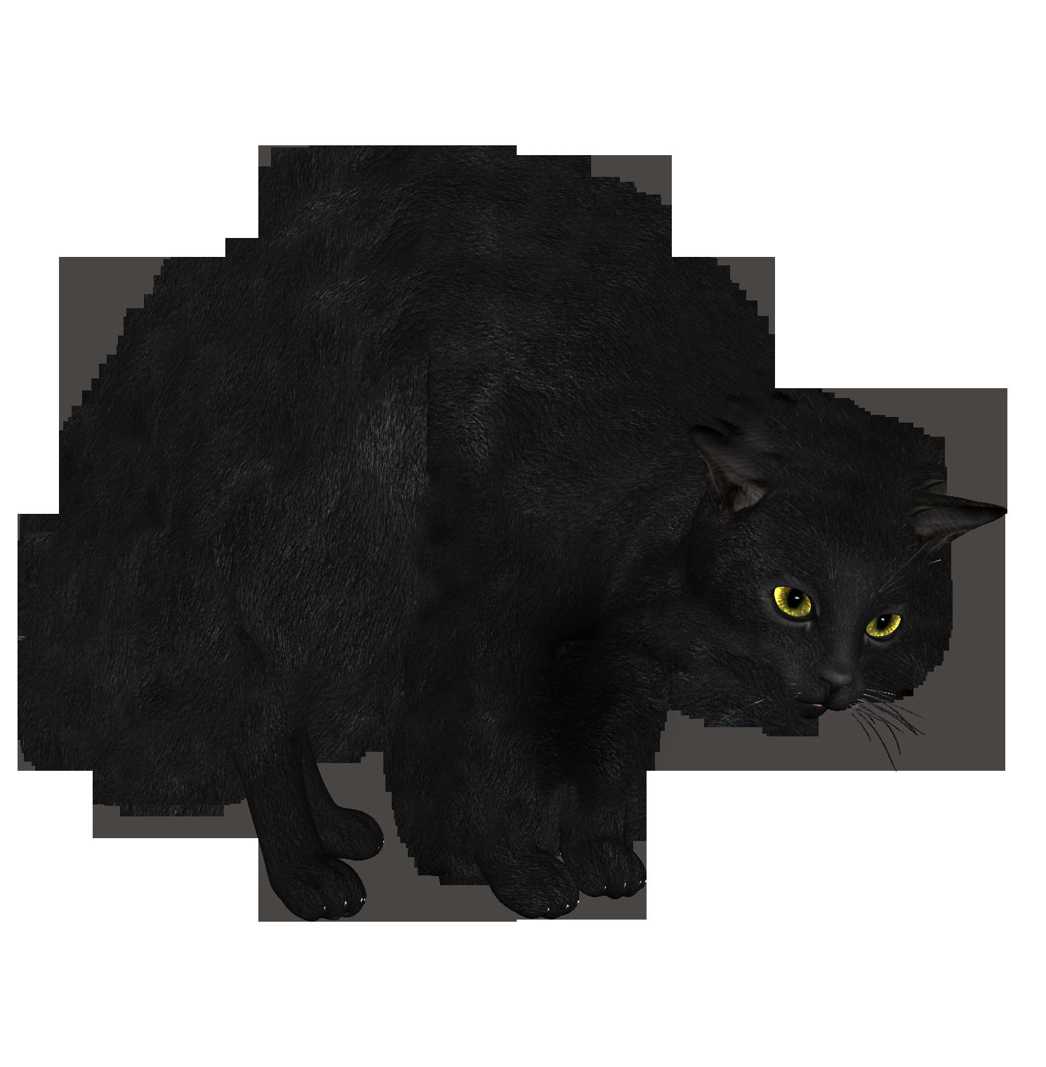 Cat PNG - 23029