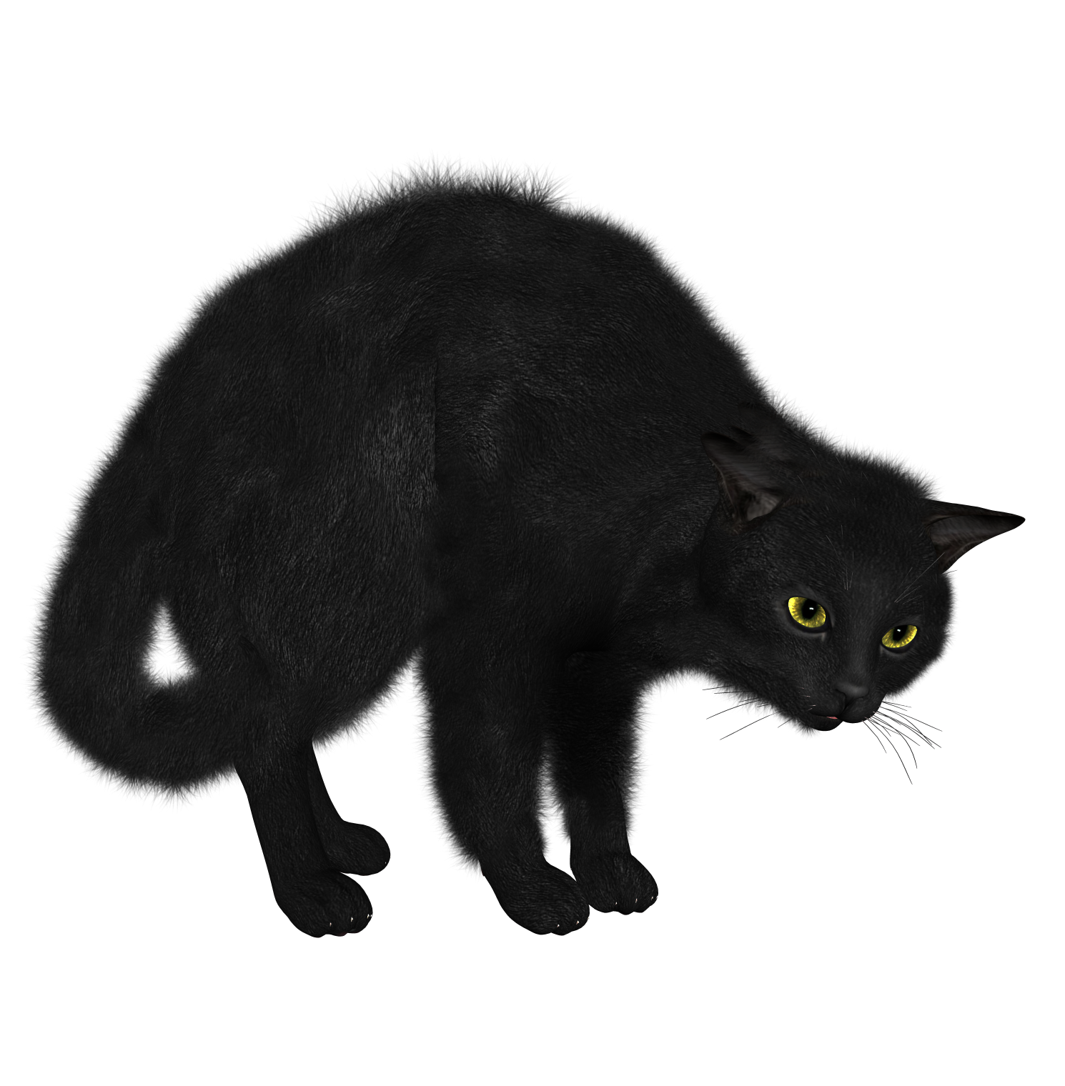 Black Cat PNG image - Cat PNG